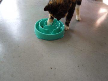 Kat met doolhof
